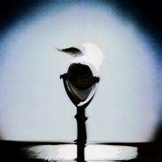 bird of satån.