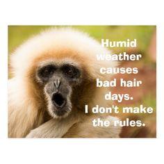 Funny Monkey Bad Hair Day Postcard