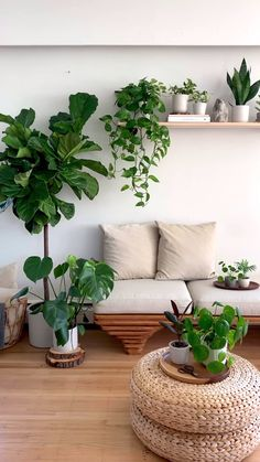 Fake Plants Decor, Room With Plants, House Plants Decor, Faux Plants, Plant Decor, Bedroom Plants Decor, Plants For Home, Best Bedroom Plants, Bathrooms With Plants