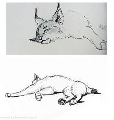 Just a couple sharpie marker sketches of a live Siberian Lynx that was brought into the studio this summer. His name is Aslan. It was an i...
