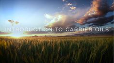 Video: Introduction to Carrier Oils