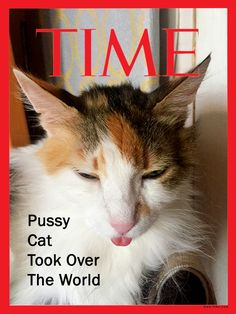 #cat #funny #time #cover #timecover #news