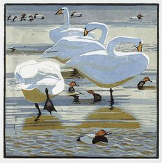 Whooper Swans and Pochards by Robert Greenhalf