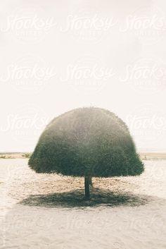 Lonely Tree on the Beach by Marija Savic  #stocksy #realstock