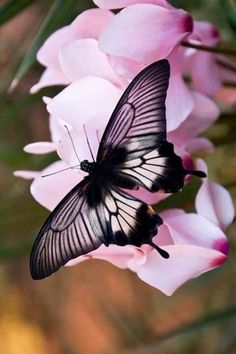 #BeautifulThings #Butterfly #Flowers