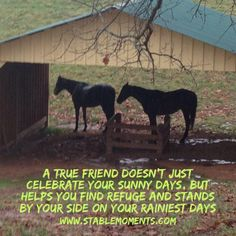 #horse #quotes #horsetherapy #nonprofit #foster #adoption