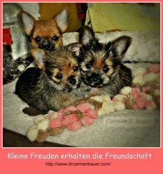 Three little Chorkys. See my books on: http://drcarmenbauer.jimdo.com/