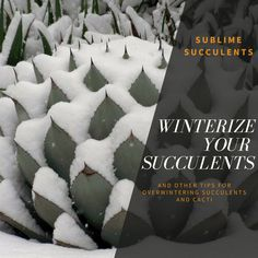 Elegant Winter is ing Don ut be caught off guard Make sure your