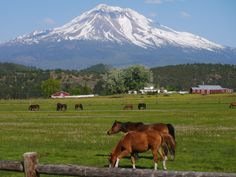 Mount Shasta travel guide