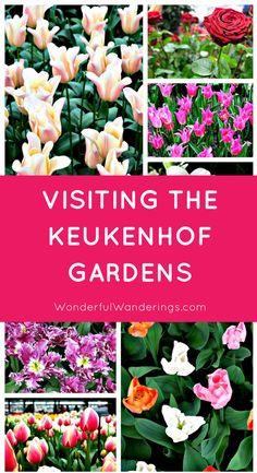 Keukenhof Gardens in Lisse, the Netherlands seen from the ground & sky