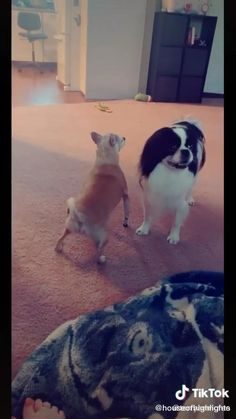 Funny Animal Videos, Animal Memes, Funny Animals, Cute Animals, Cute Pug Puppies, Cute Pugs, Stupid Funny Memes, Wtf Funny, Beautiful Dogs