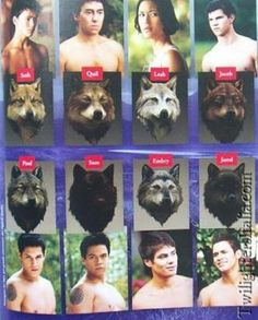 Coming Soon - All Roads Lead Home - a new twilight x Harry potter story - wolf pack Twilight Wolf Pack, Twilight Jacob, Twilight Saga Quotes, Twilight Saga Series, Twilight Series, Twilight Movie, Xavier Samuel, Le Clan, Twilight Pictures