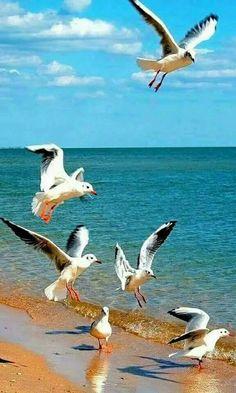flag of Ocean Simply breathtaking - sea life Seascape Paintings, Landscape Paintings, Beautiful Birds, Animals Beautiful, Photos Voyages, Sea Birds, Beach Scenes, Ocean Scenes, Beach Art