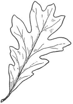 How to Draw Oak Leaves with Step by Step Drawing Lessons (leaf art drawing) Flower Drawing Tutorial Step By Step, Flower Drawing Tutorials, Flower Step By Step, Drawing Flowers, Flower Drawings, Drawing Ideas, Leaf Drawing, Plant Drawing, Leaves Sketch