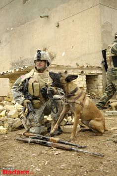 Military Working Dogs and their handlers in action. (36)