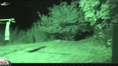 Ufo Evidence: Jovens Gravam Extraterrestre Grey
