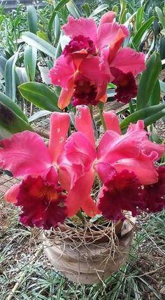 ✿⊱❥ Orquídeas