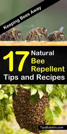 Learn how to get rid of bees from your house, yards, and outdoor entertainment areas with these natural bee repellent recipes. Whether you need relief while camping or you're looking for a natural spray for your skin, these tips can help! Natural Bee Repellent, Keep Bees Away, Bee Spray, Getting Rid Of Bees, Ground Bees, Wasp Repellent, How To Kill Bees, Carpenter Bee, Bees And Wasps
