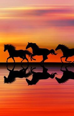 Wild horses at sunset moment love
