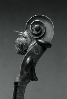 Snail on cello
