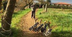 Avalancha de 'memes' a una foto de Rajoy caminando con ocas en Twitter