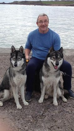 Please help find this missing Husky pup (The one on the left on the image). The Husky picked up a scent and ran off, it's owner ended up in Hospital after splitting his head. Sadly the dog is sill missing around Tain, Highlands of Scotland.