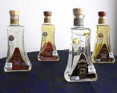 Las 4 etiquetas de agave espadín.