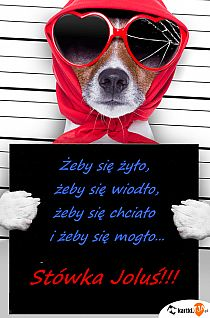 Cat Eye Sunglasses, Humor, Funny, Style, Lps, Names, Quotes, Pictures, Dog