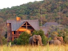 Kololo Game Reserve South Africa