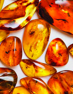 Amber helps one ground express spiritual thoughts + assists in dissolving harmonizing energy blockages. Crystals Minerals, Rocks And Minerals, Crystals And Gemstones, Stones And Crystals, Healing Stones, Crystal Healing, Pierre Ambre, Amber Fossils, Rocks And Gems