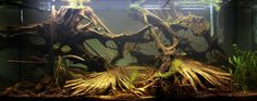With or without water... this leaf litter rocks! Remember that the type and mix of leaf litter gives a lot of personality to your tank as well :)
