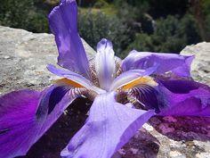 Photography Projects, School Projects, Iris, Irise, Irises