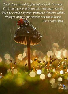 Ladybug / ladybird on a mushroom in the rain. I Love Rain, No Rain, Foto Macro, Fotografia Macro, Singing In The Rain, Rain Drops, Dew Drops, Water Drops, Bokeh