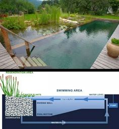 New Ideas Backyard Pond Natural Swimming Pools Natural Swimming Ponds, Natural Pond, Swimming Pools, Lap Pools, Indoor Pools, Ponds Backyard, Backyard Ideas, Backyard Waterfalls, Gazebo Ideas