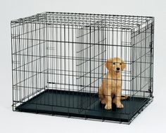Lets be #friends on #google+ and get the full information about #dog #fence & #dog #lovers at https://plus.google.com/u/0/116283909889590523908