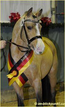 #Kreuth Körung deutsches #Pferd - #Fotografie copyright by Max Schreiner
