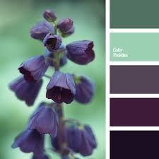 Image result for color palette winter