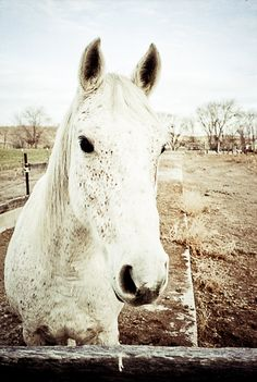 Equestrian theme home decor teenager horse whisperer pony black and white sepia for her spotted My friend Flicka fine art photograph. $25.00, via Etsy.