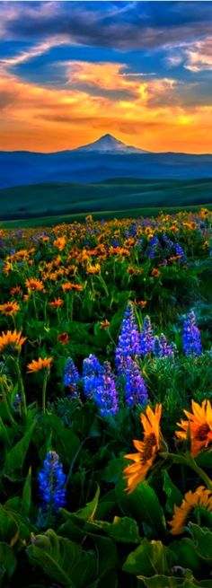 Columbia Hills State Park WA at Spring by Michael Brandt Travel Gurus - Follow for more Nature Photographies!