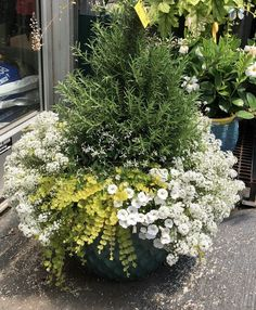 Flower Garden 38 Comfy Summer Container Garden Decoration Ideas - With the rest of the garden blooming with colour and life, why not transfer a little of that colour to […] Outdoor Plants, Outdoor Gardens, Outdoor Garden Decor, Small Gardens, Container Flowers, Evergreen Container, Evergreen Herbs, Full Sun Container Plants, Winter Container Gardening