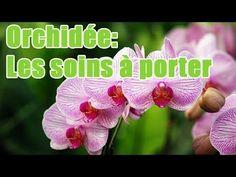 Quels soins apporter à une orchidée ? - YouTube