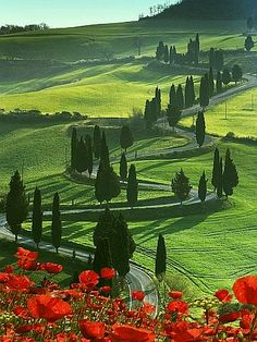 Winding Road and Poppies, Montichiello, Tuscany, Italy, Europe  http://gemellipress.com