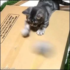 KITTEN GIF • Cute fail. Excited Kitten tries to catch his toy but he can't because too fast for him :(
