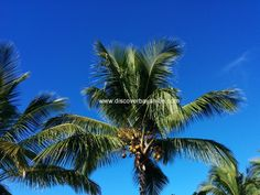 Love the palm trees! And also the beautiful blue sky :) This morning in Bayahibe, Dominican Republic www.discoverbayahibe.com