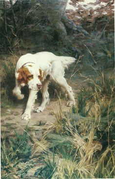 """The """"English Setter"""" 1983 AKC Vintage Color Book Print. Our Setter, Boy, is the BEST dog we have ever had!"""