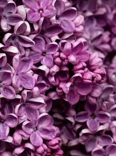 Purple Flower Pictures, Flower Images, Purple Flowers, Spring Colors, Spring Flowers, Free Spring Wallpaper, French Lilac, Spring Pictures, Social Media Images