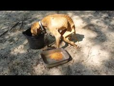 Villalobos Rescue Centers tackles worst case of neglect in a dog they have ever seen