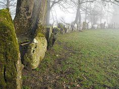 Grange Lios, Stone Circle, Co. Limerick.