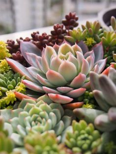 I love succulents! They take little care but really add and make it seem homey!