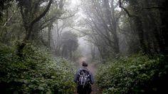 'Llanos del Juncal': Las redes sociales amenazan al bosque con el que la Glaciación no pudo | Ciencia | EL PAÍS